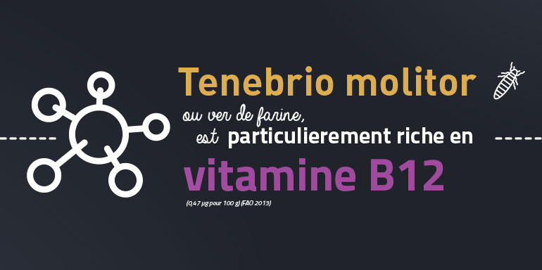 futura-food-insectes-comestibles-riches-vitamine-b12